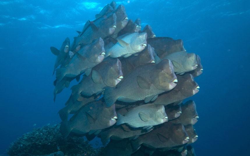 Explore coral reefs 25 Коралловые рифы в фотографиях