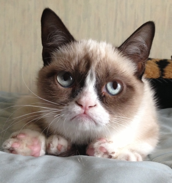Grumpy Cat 1  Самый сердитый кот Интернета