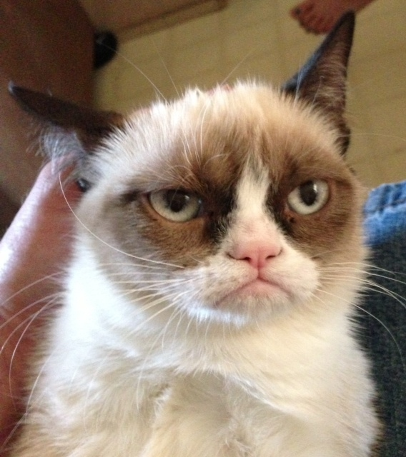 Grumpy Cat 2  Самый сердитый кот Интернета