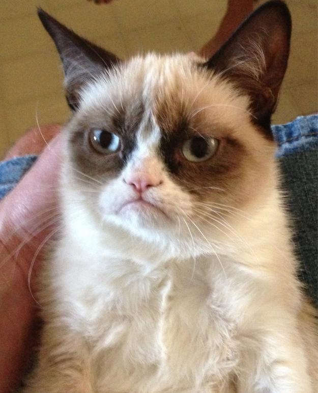 Grumpy Cat 3  Самый сердитый кот Интернета