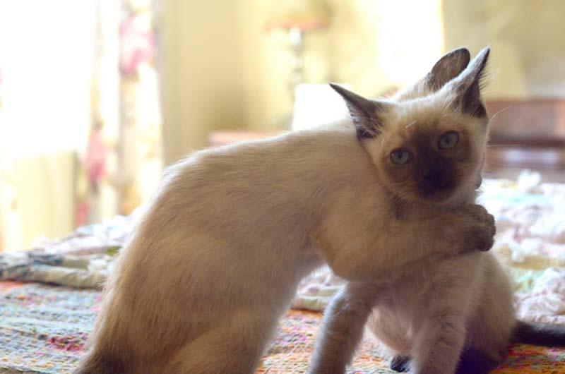 Kitten Hugging Techniques 1 Учимся обниматься у кошек