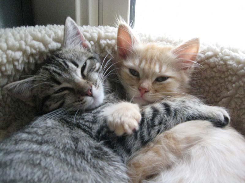 Kitten Hugging Techniques 10 Учимся обниматься у кошек