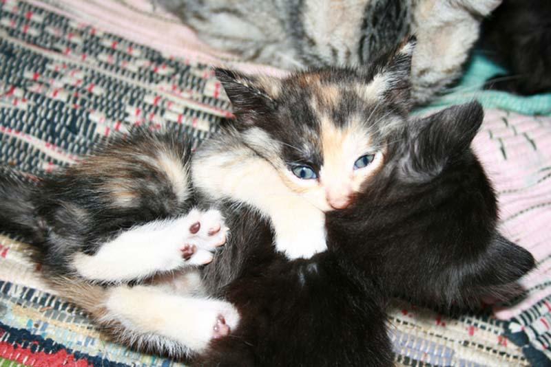 Kitten Hugging Techniques 11 Учимся обниматься у кошек