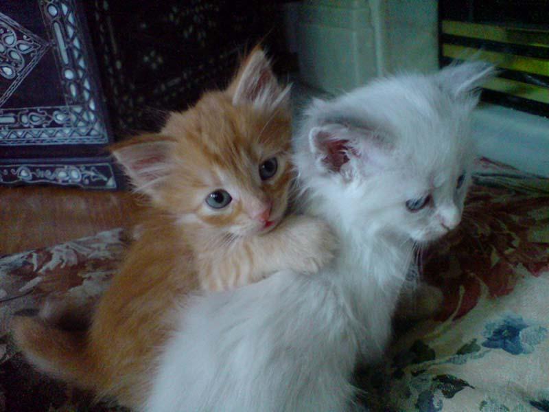 Kitten Hugging Techniques 12 Учимся обниматься у кошек