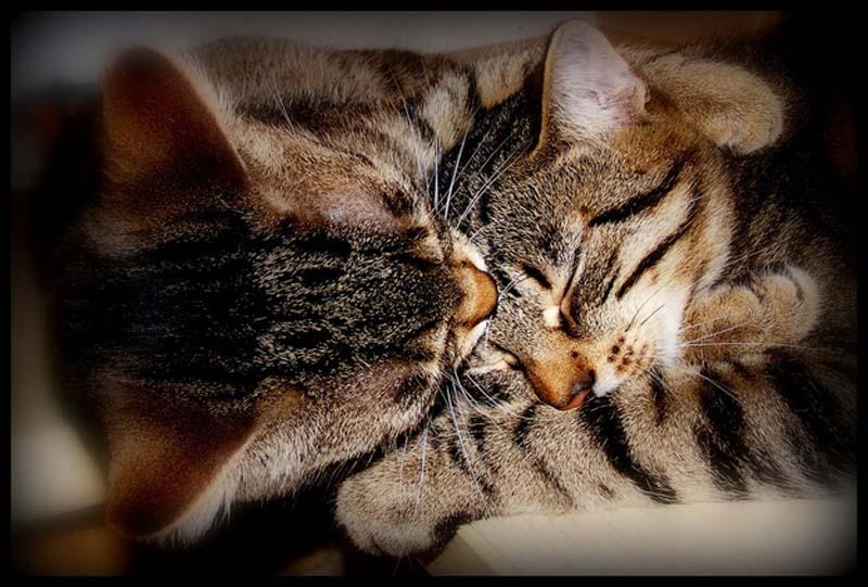 Kitten Hugging Techniques 13 Учимся обниматься у кошек