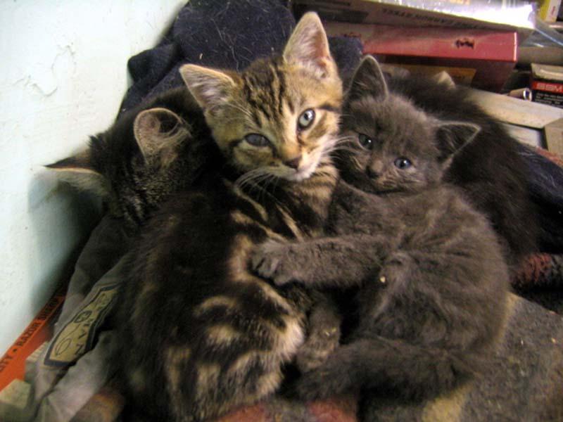 Kitten Hugging Techniques 14 Учимся обниматься у кошек