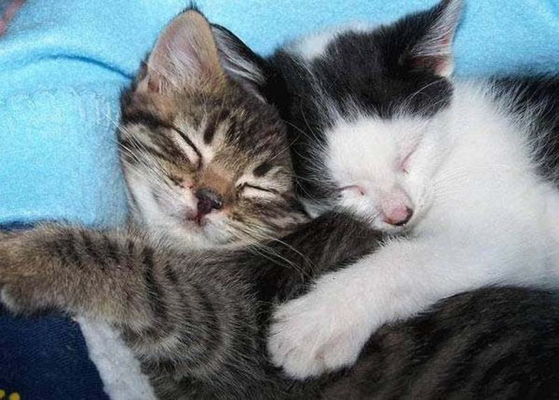 Kitten Hugging Techniques 16 Учимся обниматься у кошек