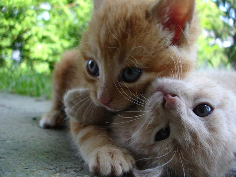 Kitten Hugging Techniques 17 Учимся обниматься у кошек