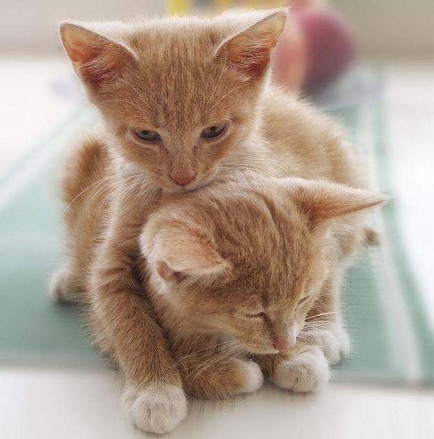 Kitten Hugging Techniques 19 Учимся обниматься у кошек