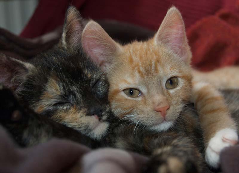 Kitten Hugging Techniques 20 Учимся обниматься у кошек