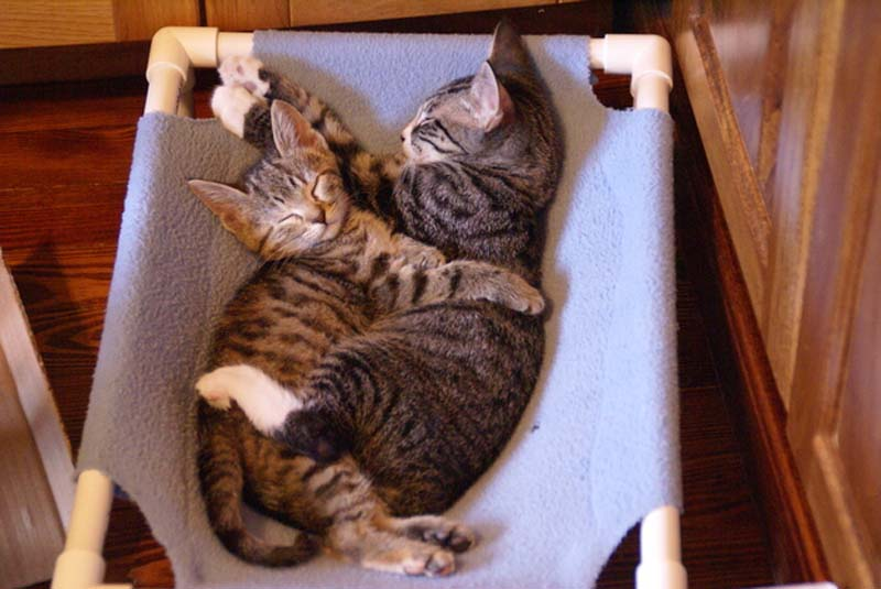 Kitten Hugging Techniques 21 Учимся обниматься у кошек