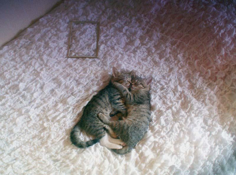 Kitten Hugging Techniques 23 Учимся обниматься у кошек
