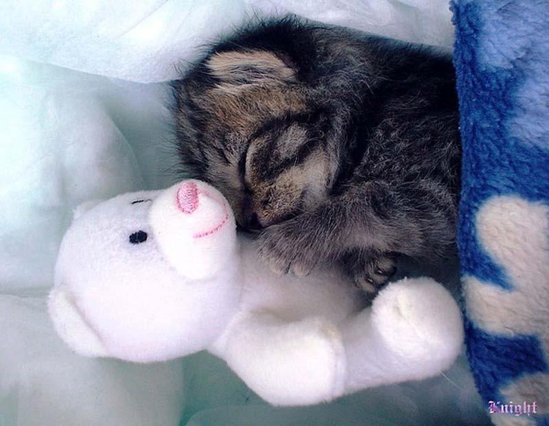 Kitten Hugging Techniques 24 Учимся обниматься у кошек