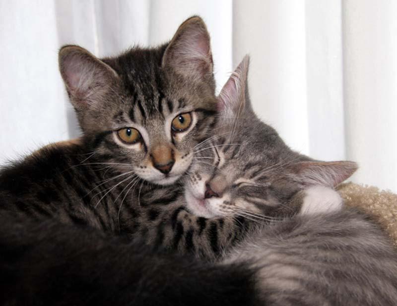 Kitten Hugging Techniques 3 Учимся обниматься у кошек