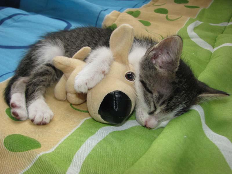 Kitten Hugging Techniques 4 Учимся обниматься у кошек