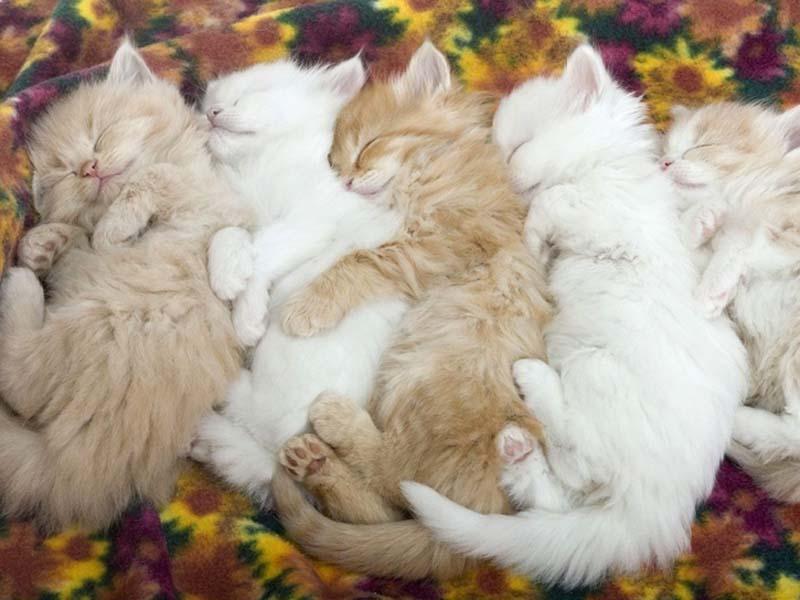 Kitten Hugging Techniques 6 Учимся обниматься у кошек