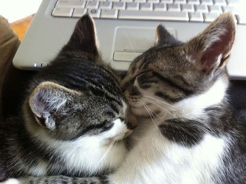 Kitten Hugging Techniques 7 Учимся обниматься у кошек