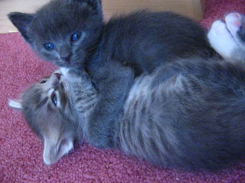 Kitten Hugging Techniques 8 Учимся обниматься у кошек