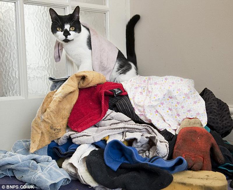 Real life cat 1 Кот воришка таскает вещи у соседей