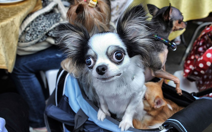 The pampered dogs 1 Счастливые собачки Гонконга