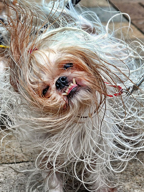 The pampered dogs 10 Счастливые собачки Гонконга