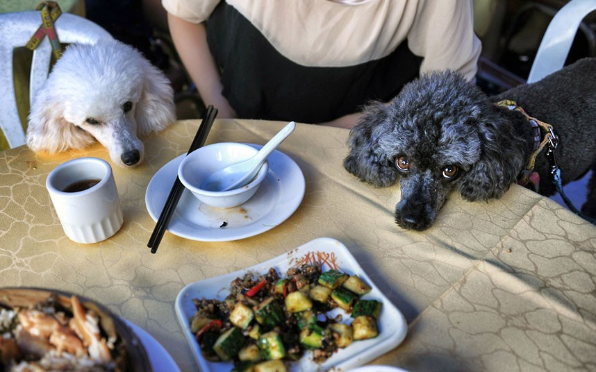 The pampered dogs 11 Счастливые собачки Гонконга