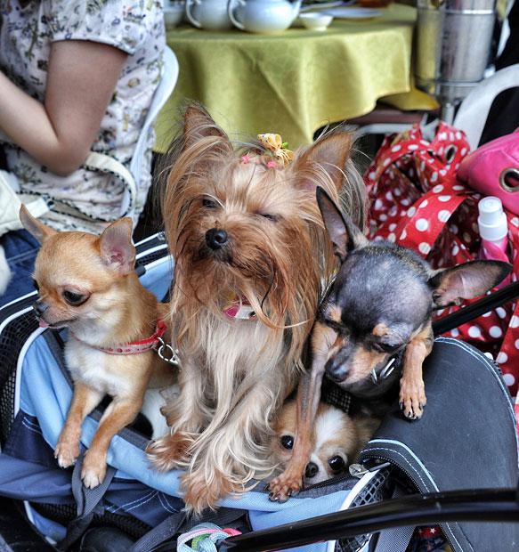 The pampered dogs 12 Счастливые собачки Гонконга