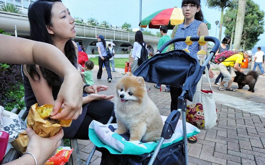 The pampered dogs 13 Счастливые собачки Гонконга