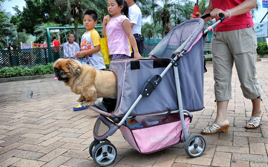The pampered dogs 14 Счастливые собачки Гонконга