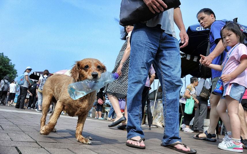 The pampered dogs 15 Счастливые собачки Гонконга