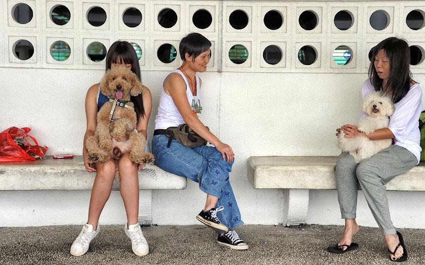 The pampered dogs 16 Счастливые собачки Гонконга