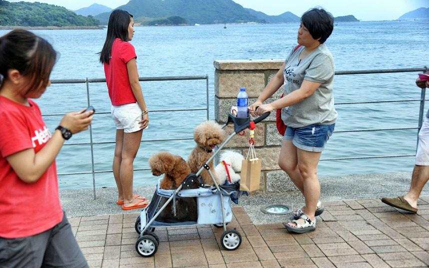 The pampered dogs 2 Счастливые собачки Гонконга