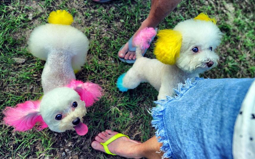 The pampered dogs 3 Счастливые собачки Гонконга