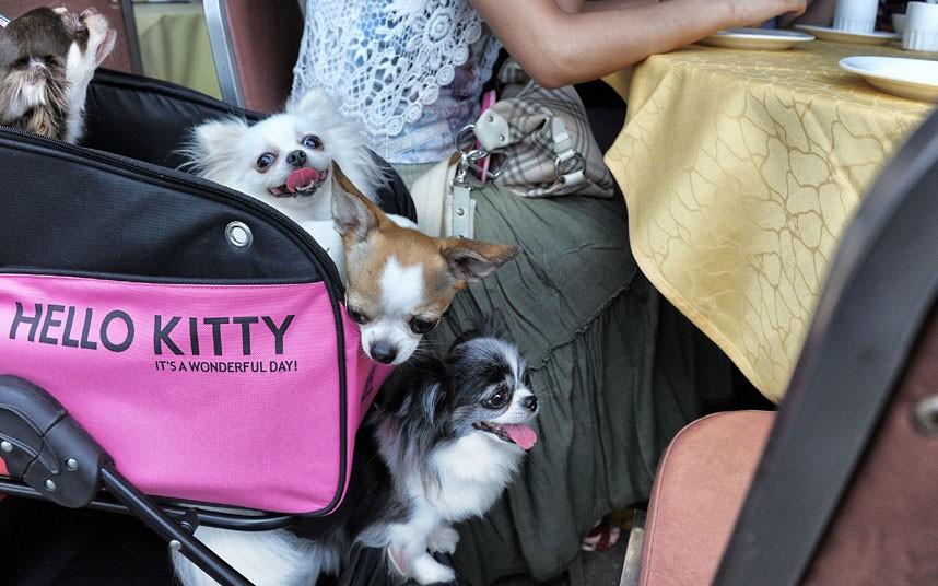The pampered dogs 7 Счастливые собачки Гонконга