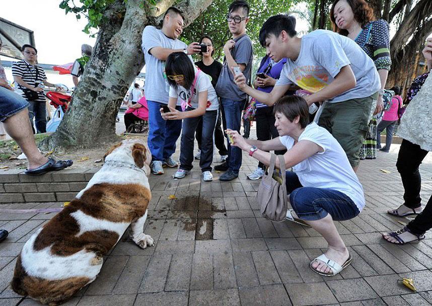 The pampered dogs 9 Счастливые собачки Гонконга