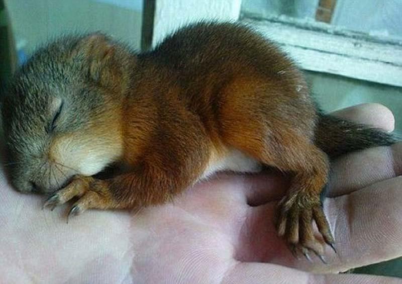 The squaddie and the squirrel 1 Военный вырастил бельчонка