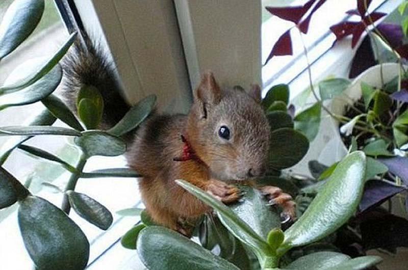 The squaddie and the squirrel 10 Военный вырастил бельчонка