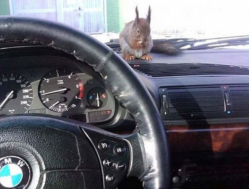 The squaddie and the squirrel 4 Военный вырастил бельчонка