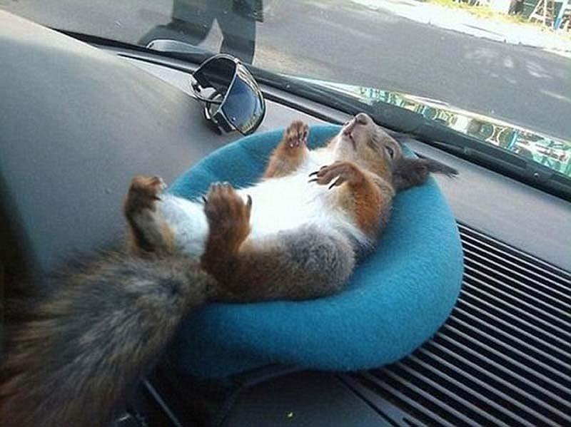 The squaddie and the squirrel 5 Военный вырастил бельчонка