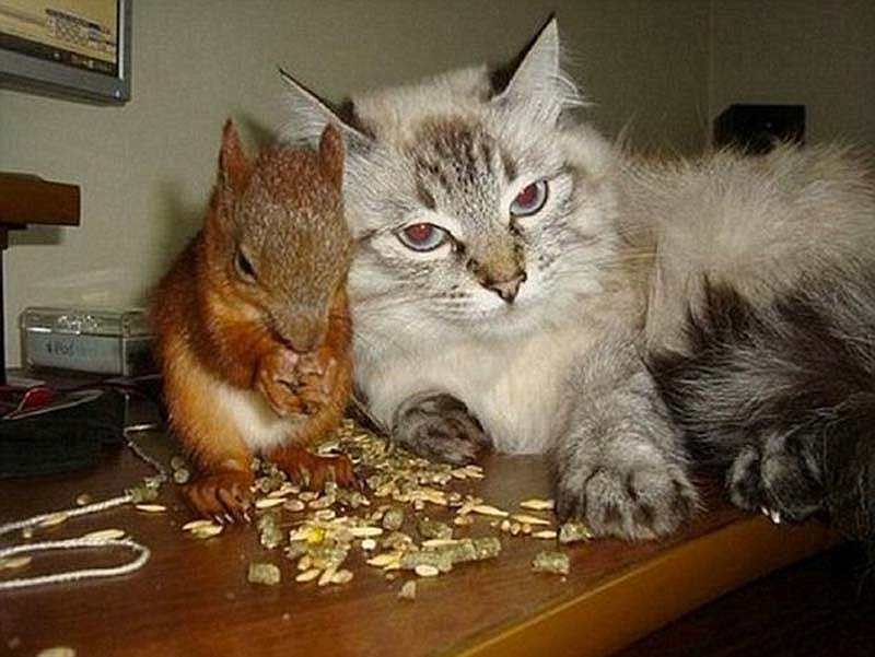 The squaddie and the squirrel 7 Военный вырастил бельчонка