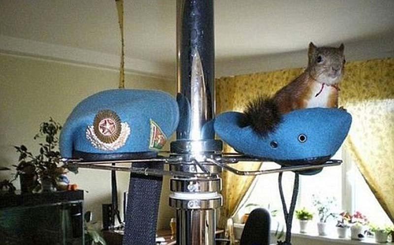 The squaddie and the squirrel 8 Военный вырастил бельчонка