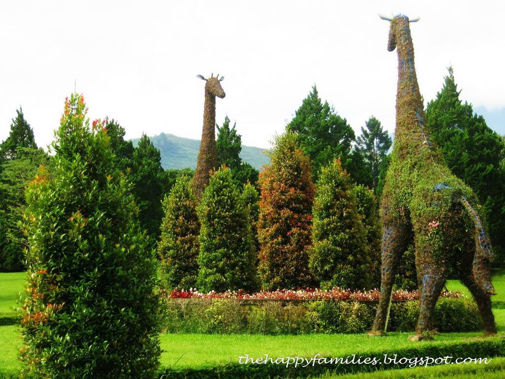 Topiary13 Топиари   зеленое искусство