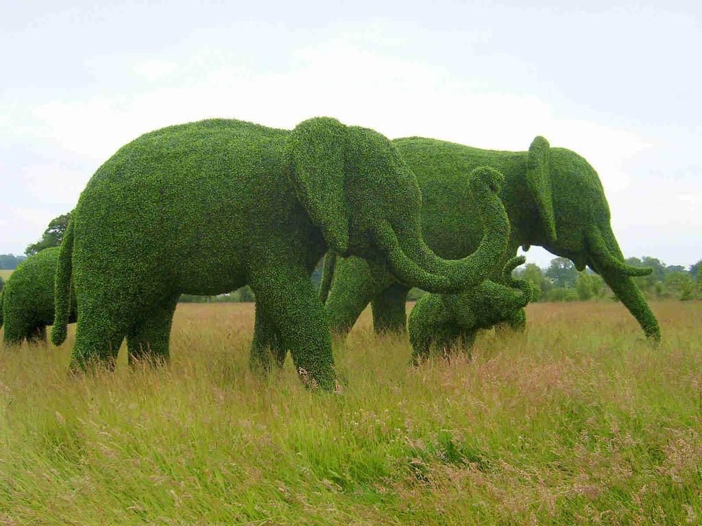 Topiary14 Топиари   зеленое искусство