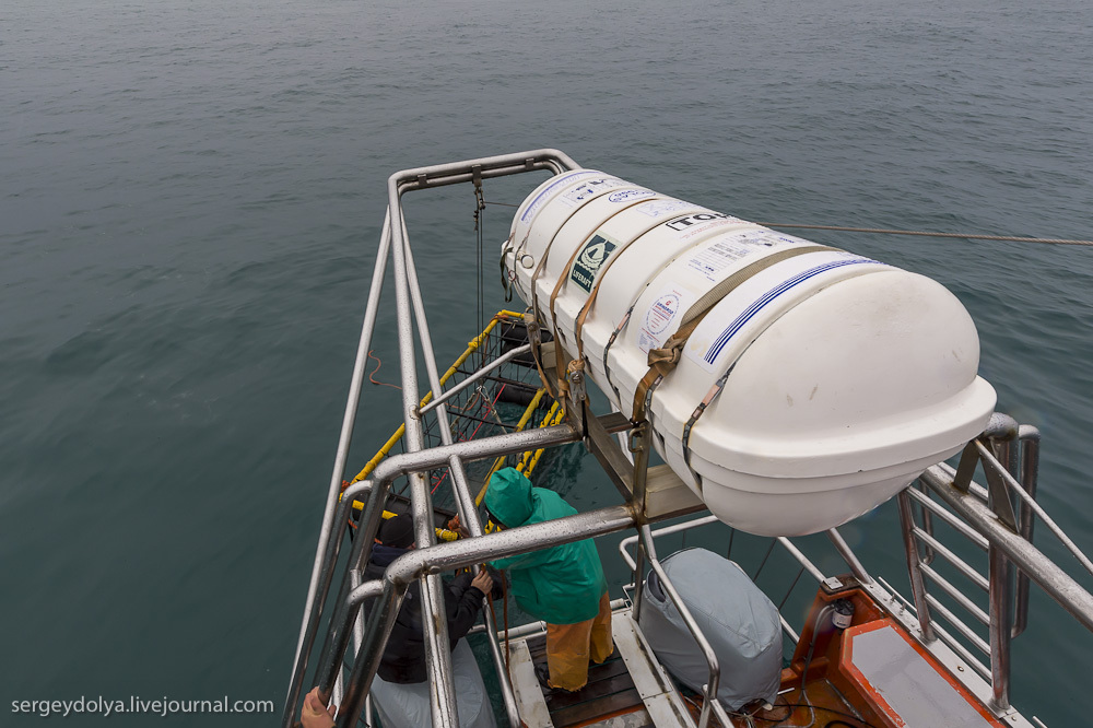 UR 10 Погружение в клетке к большим белым акулам