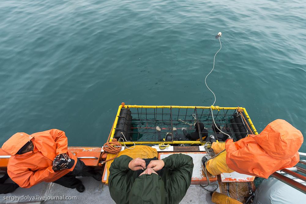UR 13 Погружение в клетке к большим белым акулам