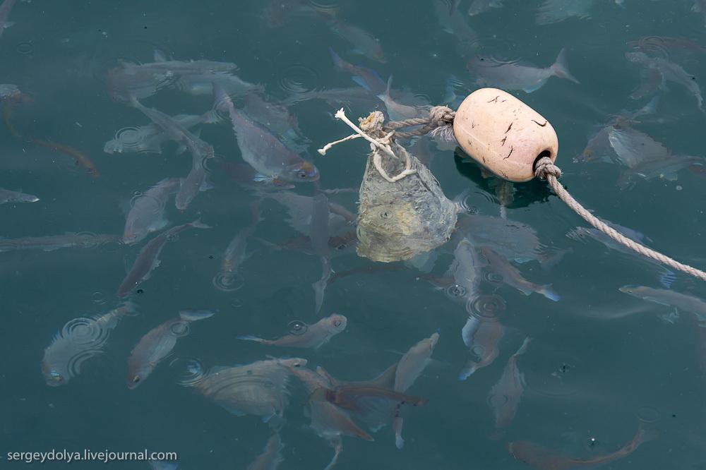 UR 15 Погружение в клетке к большим белым акулам