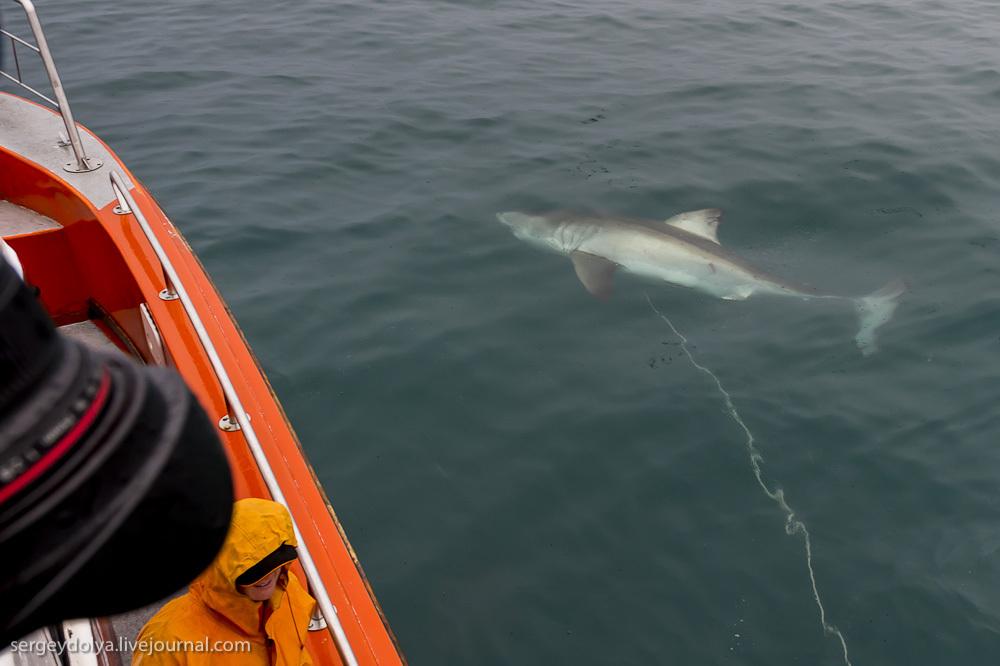 UR 20 Погружение в клетке к большим белым акулам