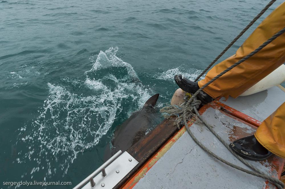 UR 27 Погружение в клетке к большим белым акулам
