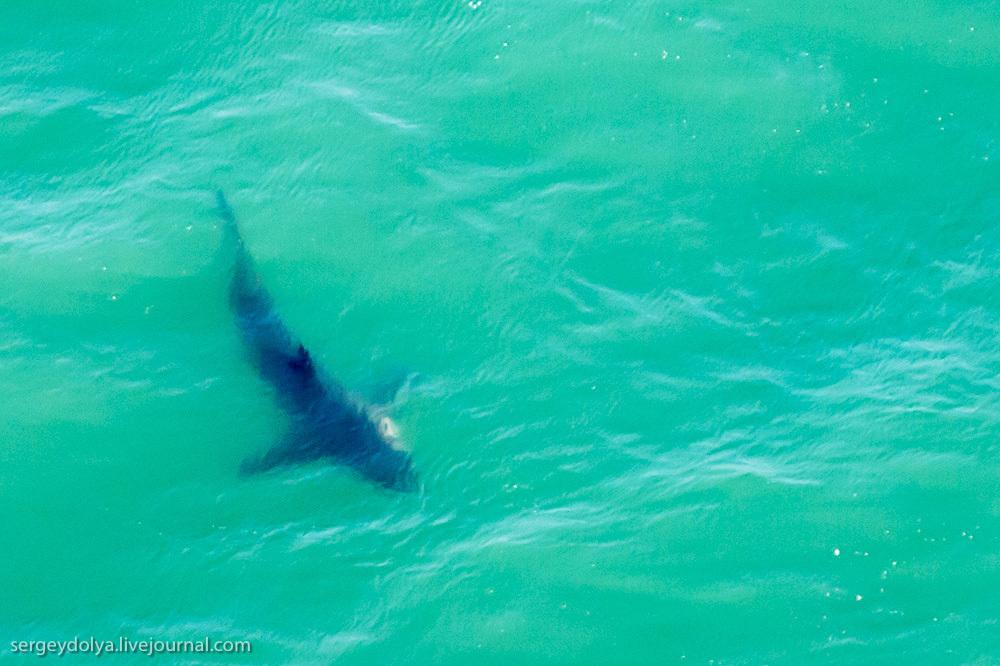 UR 35 Погружение в клетке к большим белым акулам