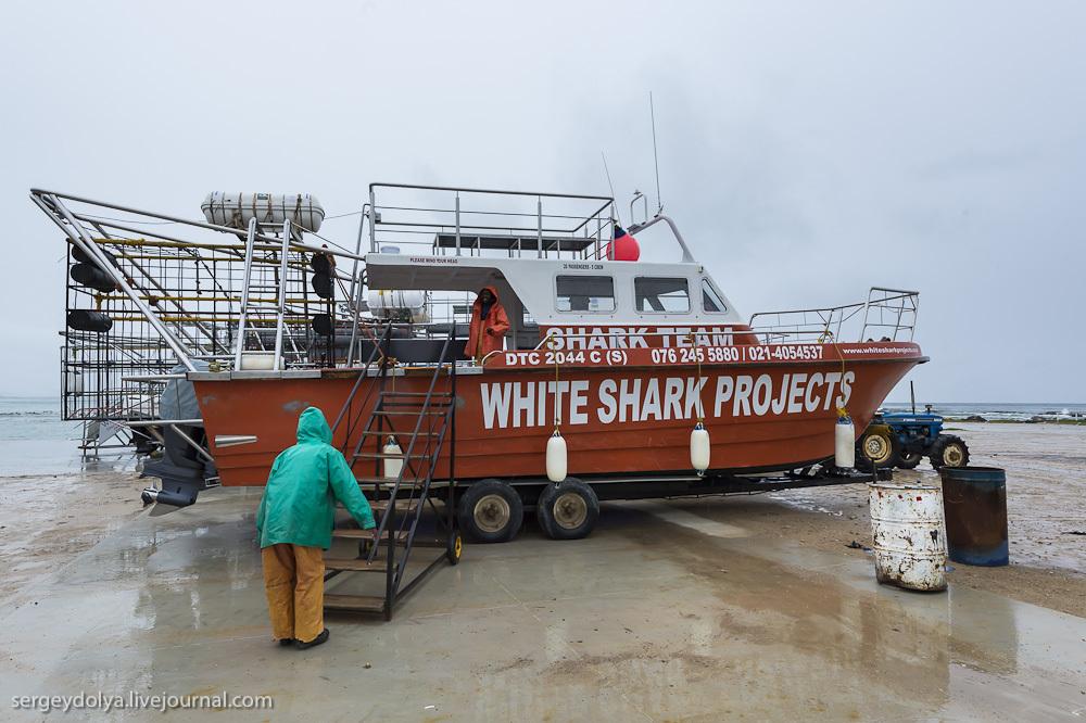 UR 5 Погружение в клетке к большим белым акулам